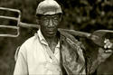 Jamaican Coffee Farmer/ Blue Mountains Jamaica